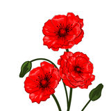 Amapolas rojas - vector Foto de archivo