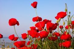 Amapolas rojas y cielo azul y mar Imágenes de archivo libres de regalías