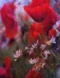 Amapolas rojas y margaritas blancas fotografía de archivo