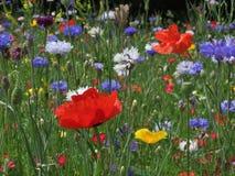 Amapolas y Cornflowers Imagen de archivo libre de regalías