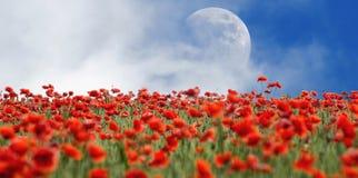 Amapolas y luna Fotos de archivo
