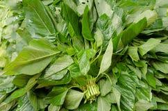 Amarant (Amarant lividus) Lizenzfreie Stockfotos