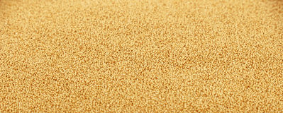 Amaranth grain seeds close up background. Amaranth grain seeds close up pattern background, low angle view, selective focus Royalty Free Stock Photo