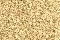 Amaranth seeds Stock Photography