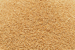 Amaranth seeds Royalty Free Stock Images