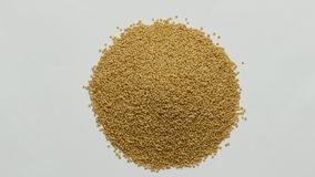 Amaranth seeds rotating on white background. stock video footage