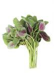 Amaranth vegetable Stock Photos