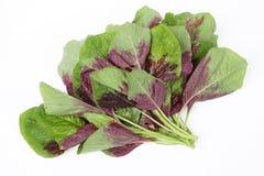 Amaranth vegetable Stock Images
