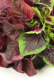 Amaranth vegetable Royalty Free Stock Images