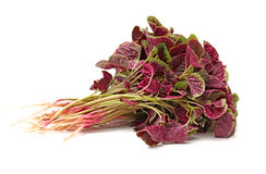 Amaranth Stock Image