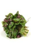 amaranthgrönsak Arkivbild