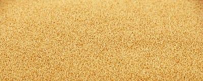 Amaranthkorn kärnar ur tätt upp bakgrund Royaltyfri Foto