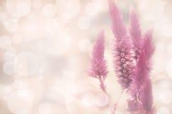 Amaranthus Fotografering för Bildbyråer