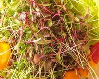 Amaranto, beterraba, e microgreens dos brócolis em uma salada vegetal Fotos de Stock Royalty Free