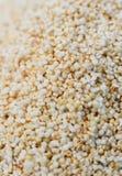 Amaranto del amaranto Imagenes de archivo