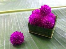 Amarantowy kwiatu kwiat i zieleni tło Obraz Royalty Free