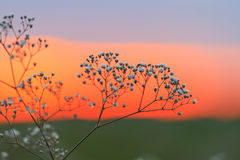 Amarantstämme bei Sonnenuntergang Lizenzfreies Stockfoto