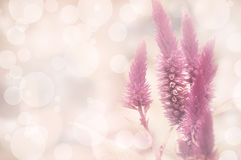 Amarantus Image stock