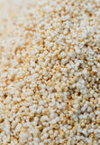 Amarantus d'amaranthe Images stock