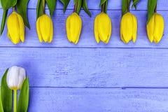 Amarele as tulipas brancas Imagens de Stock Royalty Free
