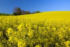 Amarele campos Fotografia de Stock Royalty Free