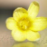 Amarele a flor Foto de Stock Royalty Free