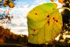Amarele a folha Foto de Stock