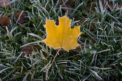 Amarele a folha caída na grama verde e na geada fotos de stock