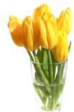 Amarele tulips Fotografia de Stock Royalty Free