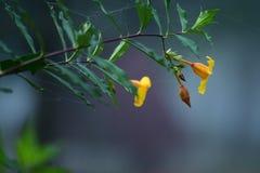 amarelo Imagens de Stock Royalty Free