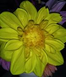 amarelo Fotos de Stock