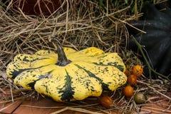 Amarelo, abóboras de outono listradas e poucas alaranjadas verdes em uma bacia imagem de stock royalty free