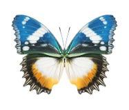 Amarelo azul da borboleta fotografia de stock