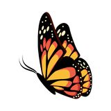 Amarelo bonito e monarca alaranjado da borboleta do assento ou do voo Fotos de Stock