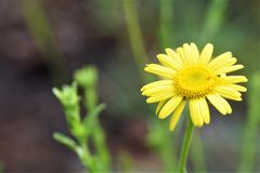 Amarelo bonito flor colorida imagens de stock royalty free