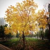 Amarelo caído Foto de Stock