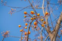 Amarelo da flor Imagens de Stock Royalty Free