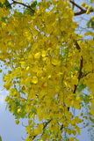 Amarelo da flor Fotos de Stock Royalty Free