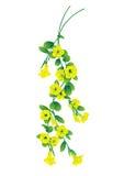 Amarelo da flor Imagem de Stock