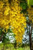 Amarelo da flor do jardim natural Fotos de Stock