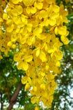 Amarelo da flor do jardim natural Fotos de Stock Royalty Free