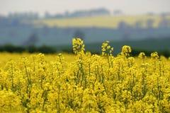 Amarelo da mola Imagem de Stock Royalty Free