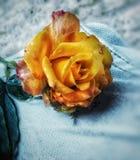 Amarelo das flores foto de stock royalty free