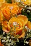 Amarelo de Rosa Imagens de Stock
