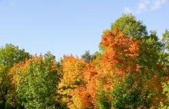 Amarelo 13 do céu azul das folhas de bordo do outono imagens de stock