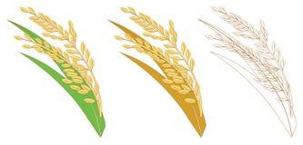 Amarelo do ouro do arroz Imagens de Stock Royalty Free