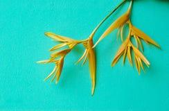 Amarelo do pássaro da flor de paraíso fotografia de stock