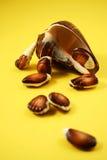 Amarelo dos Seashells do chocolate mim Imagem de Stock Royalty Free