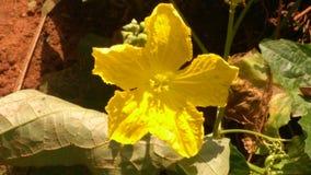 Amarelo dourado imagens de stock