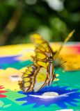 Amarelo e borboleta tropical de Brown em uma base multicolour Imagem de Stock Royalty Free